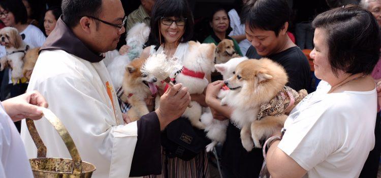 Pets Blessing di Paroki Santo Matias Cinere